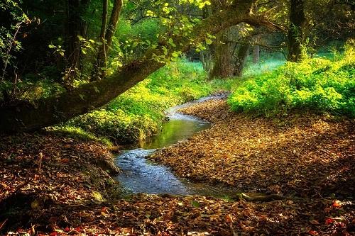 священный ручей
