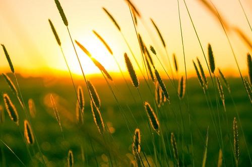 купальские травы